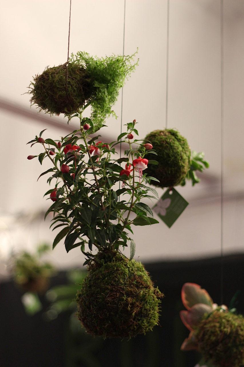 Foto de kokedma de nuestro taller