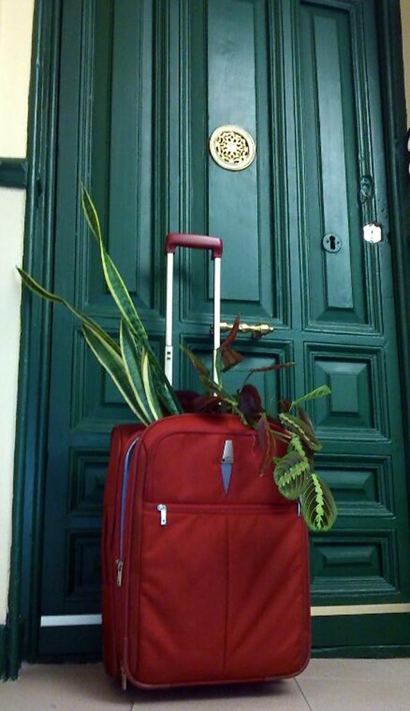 plantas_vacaciones_rojomenta