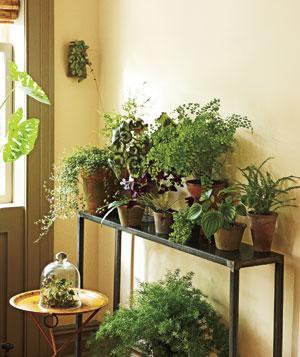 corner-indoor-garden_300
