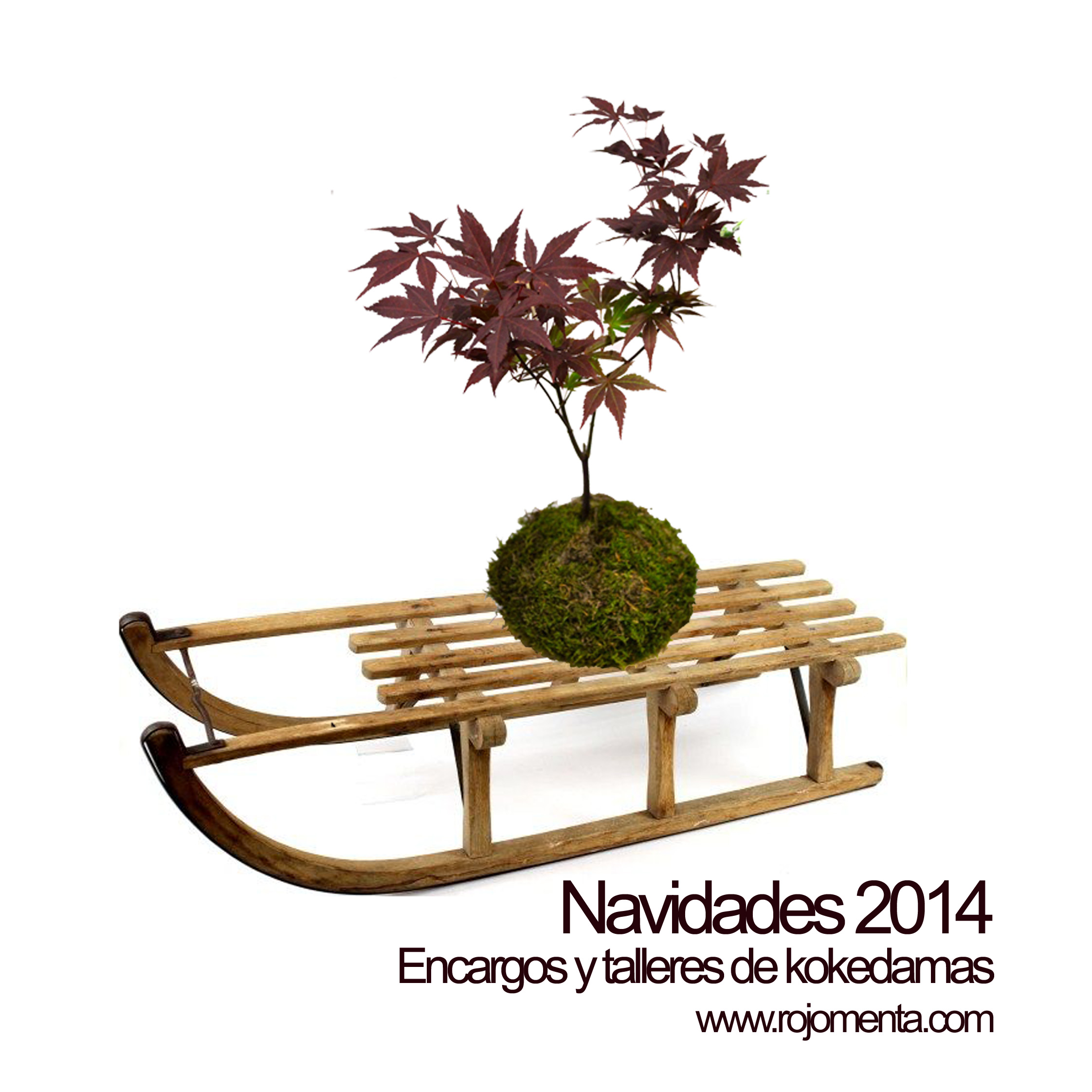 kokedamas_rojomenta_navidad_2014_talleres