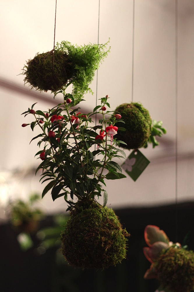 Artesania con plantas