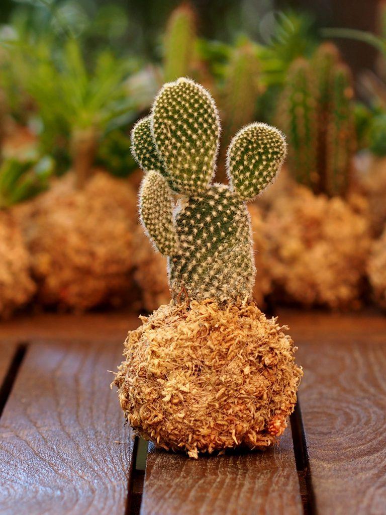 Mini kokedama suculenta y cactus