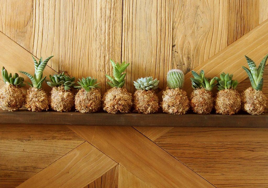 regalos con boda de planta, mini kokedamas