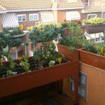 Hueto ecológio en una terraza de madrid