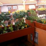 Huerta ecológica en una terraza de Madrid