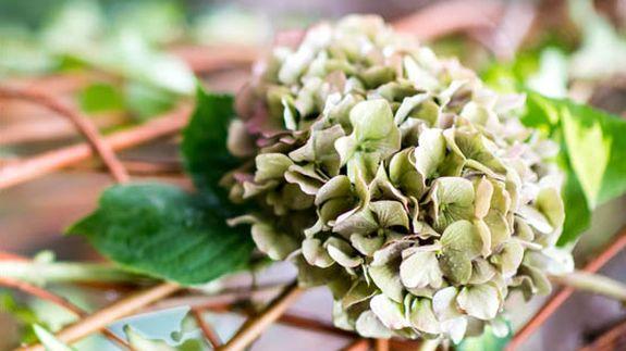 Rojomenta jardiner a ecol gica y arte floral for Jardineria ecologica