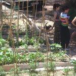 Escuela de jardinería urbana en Madrid por Rojomenta
