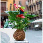 Kokedamas para decoración en Madrid de Rojomenta