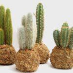 Kokedamas de cactus en Madrid de Rojomenta