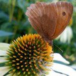 Mantenimiento ecológico de Rojomenta