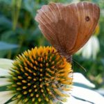 Mantenimiento ecológico en jardinería