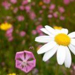 Mantenimiento ecológico de jardines y terrazas en Madrid