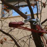 Mantenimiento de jardines mediante poda