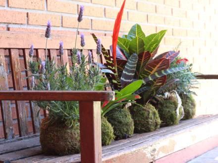 Conjunto de kokedamas sobre un banco de madera