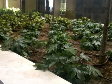Un jardín en una comunidad de vecinos de Madrid