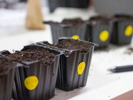 Macetas para plantar semillas