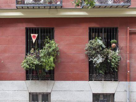 Proyecto social de rojomenta en jardinería en Malasaña