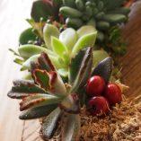 Corona de navidad con planta viva