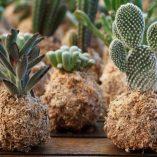 Mini kokedamas de cactus y crasas de Rojomenta