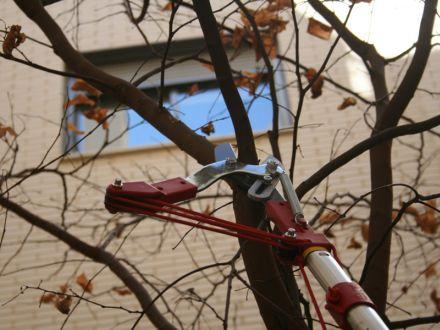 Poda de árboles en Madrid