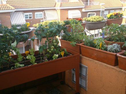 Huerto ecológico en una terraza de Madrid