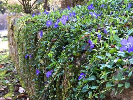 Jardínería ecológica de Rojomenta