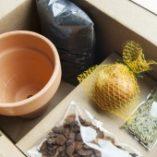 Kit de bulbos de Rojomenta y Fábrica de texturas