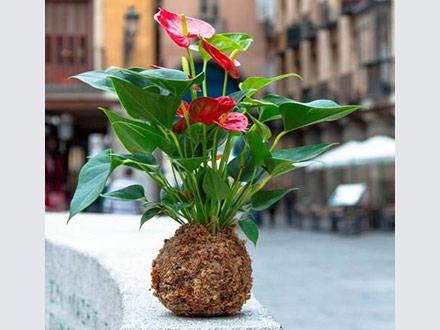 Kokedama de decoración en una calle de Madrid