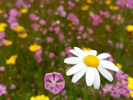 Mantenimiento ecológico de jardines en Madrid