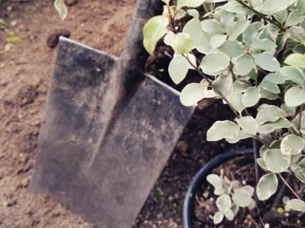 Mantenimiento de un jardín