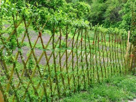 Valla de mimbre para un jardín vivo de rojomenta