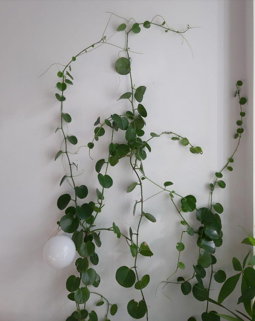 Jardines de interior - Conoce tus plantas