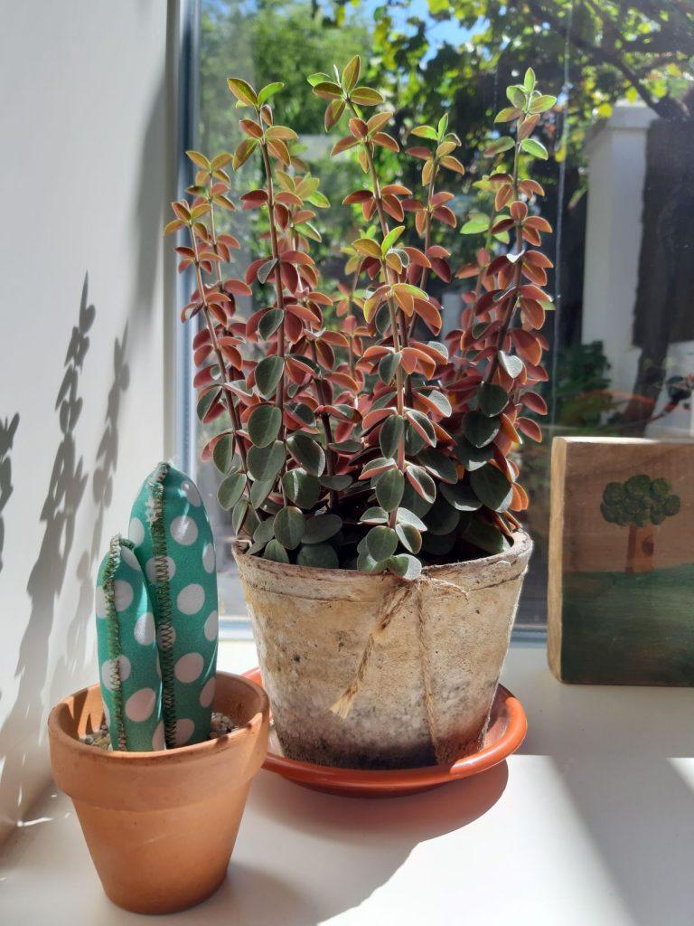 Pon a punto tus plantas de interior