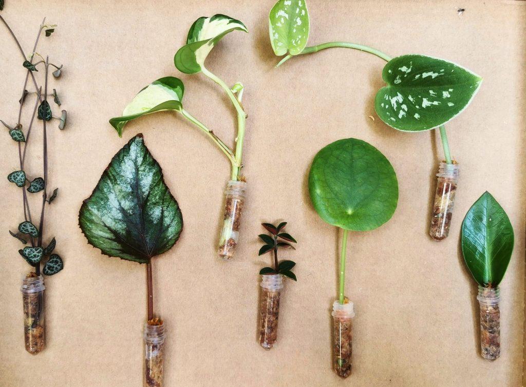Talleres-online-jardineria-multiplicación-plantas-rojomenta